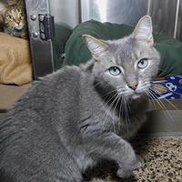 Adopt A Pet :: Jack - Jamestown, NY