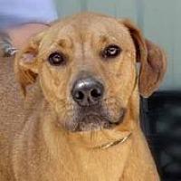Adopt A Pet :: Alex - Martinsville, IN