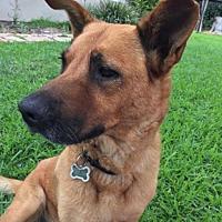 Adopt A Pet :: Liberty - Irvine, CA