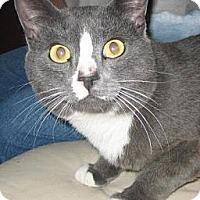 Adopt A Pet :: Rocky - Chandler, AZ