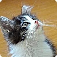 Adopt A Pet :: Angus - Escondido, CA