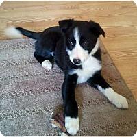 Adopt A Pet :: Zoie - Salt Lake City, UT