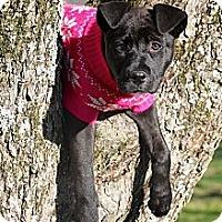 Adopt A Pet :: Morgan - Flowery Branch, GA