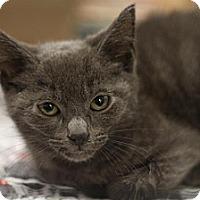 Adopt A Pet :: Christian - Sacramento, CA