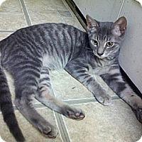 Adopt A Pet :: Blake - Ocala, FL