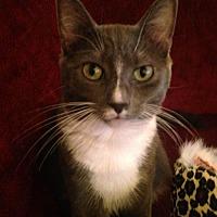 Adopt A Pet :: Weezie - NC - Liberty, NC