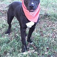 Adopt A Pet :: Kody - Comanche, TX