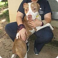 Adopt A Pet :: Jack - Tallahassee, FL
