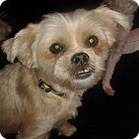 Adopt A Pet :: Teddy - Bakersfield, CA