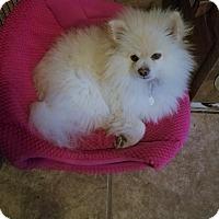 Adopt A Pet :: Lugo - conroe, TX
