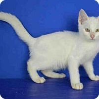 Adopt A Pet :: A029687 - Norman, OK
