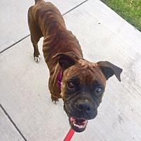 Adopt A Pet :: Mariana - Austin, TX