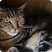 Adopt A Pet :: Zach - Redondo Beach, CA