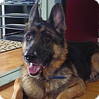 Adopt A Pet :: Jackson - Welland, ON