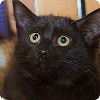 Adopt A Pet :: Stevie - Irvine, CA