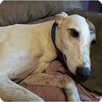 Adopt A Pet :: Jeff - Windsor Heights, WV
