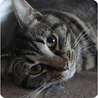 Adopt A Pet :: Sugar - Xenia, OH