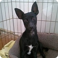 Adopt A Pet :: Chia - Santa Rosa, CA