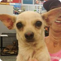 Adopt A Pet :: Touille - Tucson, AZ