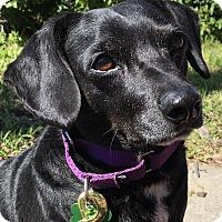Adopt A Pet :: Lucas - Los Angeles, CA