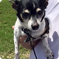 Adopt A Pet :: Tinkerbell - Olive Branch, MS