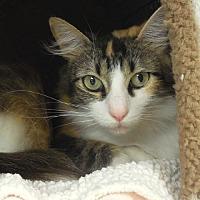 Adopt A Pet :: Victoria - Tulsa, OK