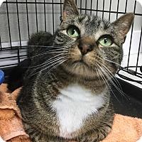 Adopt A Pet :: Junior - Webster, MA