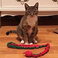Adopt A Pet :: Annie (JFS) 2.2.16 - Orlando, FL