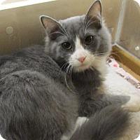 Adopt A Pet :: STACI - Diamond Bar, CA