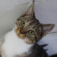 Adopt A Pet :: Roxie - Greenwood, SC