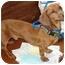 Photo 1 - Dachshund Dog for adoption in Geneva, Illinois - Oscar