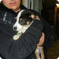 Adopt A Pet :: Mustang ADOPTED!! - Antioch, IL