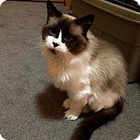 Adopt A Pet :: Chanti - Edmonton, AB