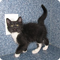 Adopt A Pet :: Max - Harrisburg, NC