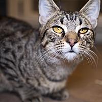Adopt A Pet :: Waffles - Tanner, AL
