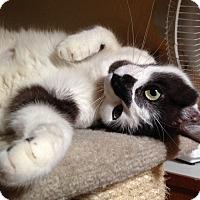 Adopt A Pet :: Sara - Phoenix, AZ