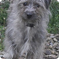 Adopt A Pet :: Lucy - North Olmsted, OH