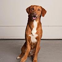 Adopt A Pet :: Hank - Hankamer, TX