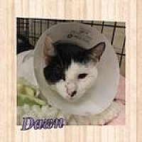 Adopt A Pet :: Dawn - Westbury, NY