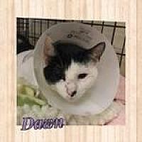 Adopt A Pet :: Dawn - Westbury, NY