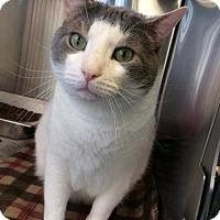 Adopt A Pet :: Melvin - Bridgewater, NJ