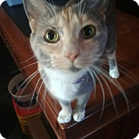 Adopt A Pet :: Harlow - South Saint Paul, MN