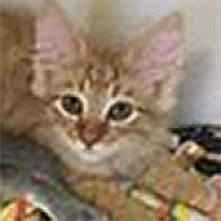 Adopt A Pet :: Grover - Warren, PA