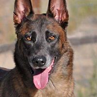 Adopt A Pet :: Ruka - Santa Clarita, CA