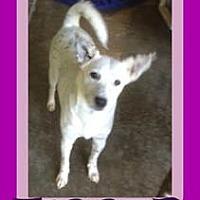 Adopt A Pet :: TIGGER - Allentown, PA
