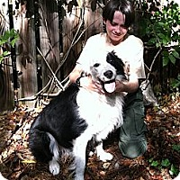 Adopt A Pet :: Tyke *VIDEO* - Columbia, SC