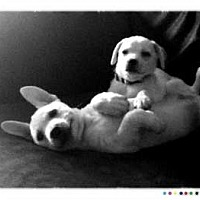 Adopt A Pet :: WESLEY - Bryan, TX