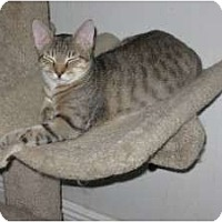 Adopt A Pet :: Jeff - Ft. Lauderdale, FL