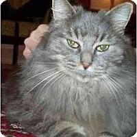 Adopt A Pet :: Natasha - Portland, OR