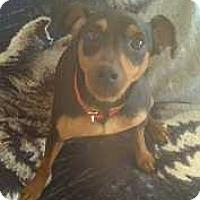 Adopt A Pet :: Ramses - Columbus, OH